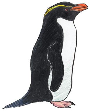 スネアーズペンギン